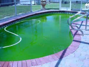 get rid of algae out of pool